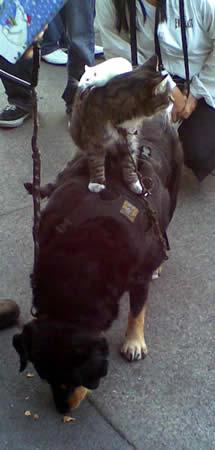 dogcatmouse
